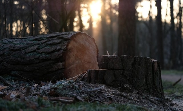 Your safety guide to dealing with a fallen tree